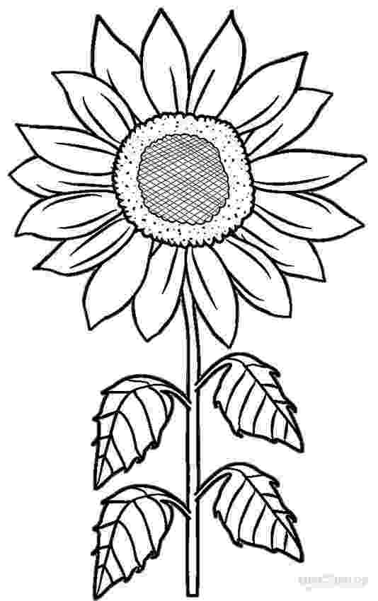sunflower color sheet sunflower coloring page getcoloringpagescom color sunflower sheet