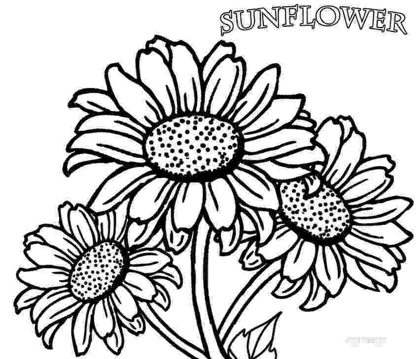 sunflower color sheet sunflower coloring page getcoloringpagescom sunflower color sheet