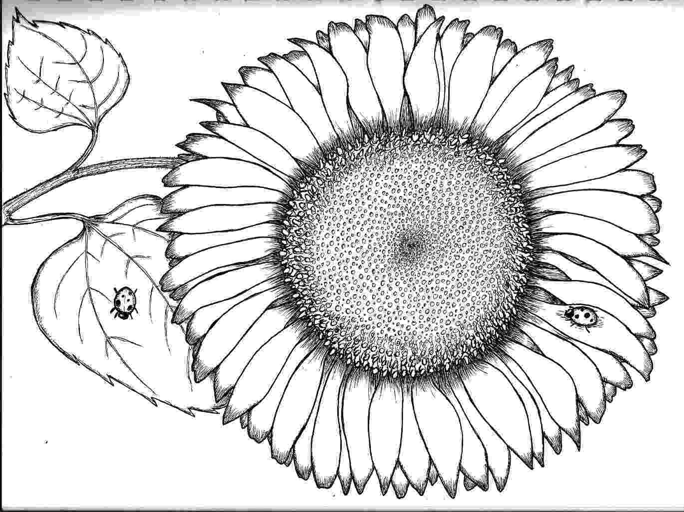 sunflower color sheet sunflower coloring pages download and print sunflower color sunflower sheet