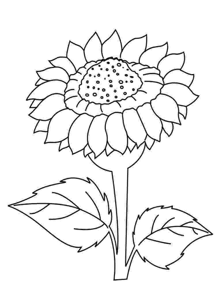 sunflower color sheet sunflower coloring pages to download and print for free color sunflower sheet
