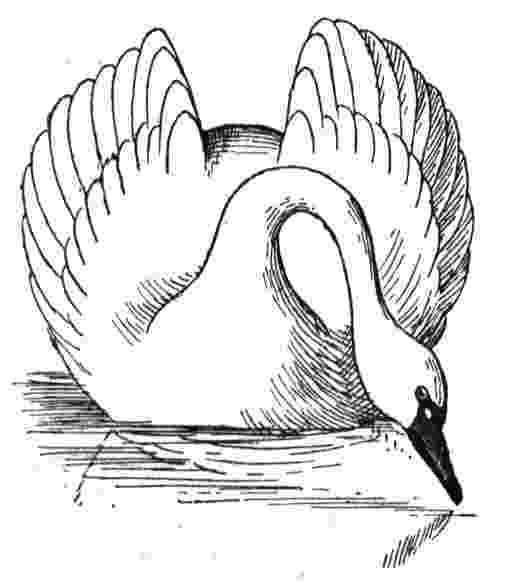 swan coloring beautiful swan coloring pages to girls coloring swan