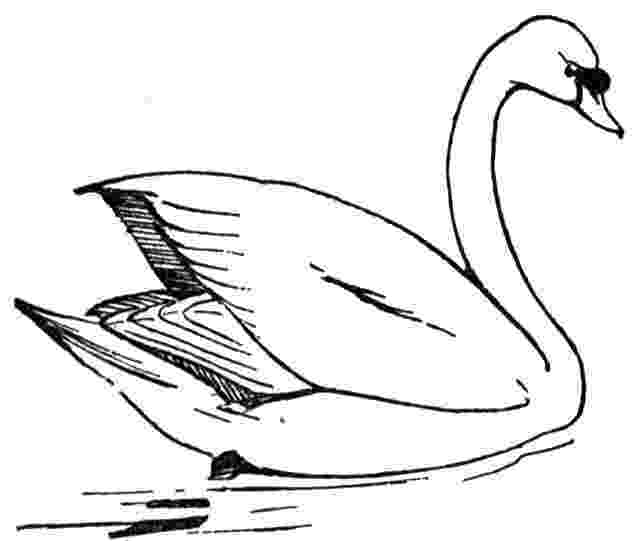 swan coloring free swan coloring pages swan coloring