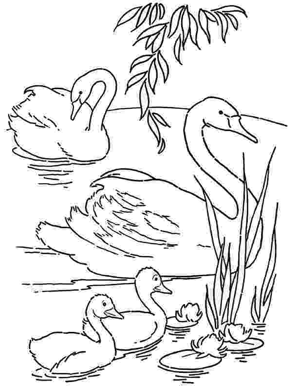 swan coloring swan coloring pages coloring pages to download and print swan coloring