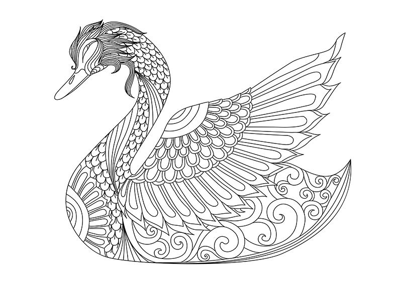 swan coloring swan coloring pages hellokidscom swan coloring