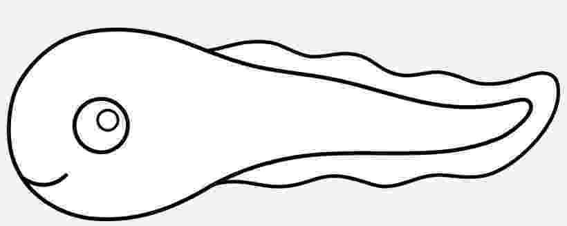 tadpole coloring page tadpole drawing at getdrawings free download page coloring tadpole