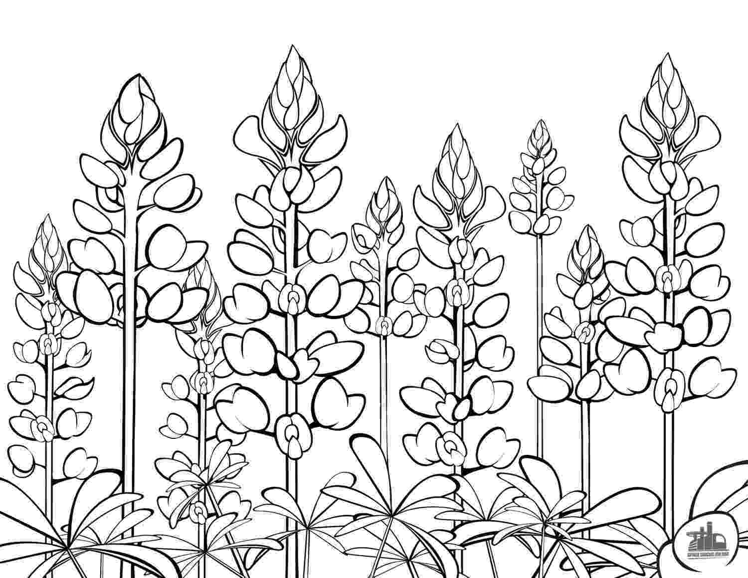texas coloring page texas bluebonnets coloring sheet texas coloring page