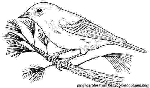 texas state bird httpdailycoloringpagescomimagestexas pine warbler state bird texas
