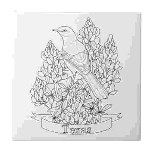texas state bird tennessee state bird mockingbird coloring page teaching state bird texas