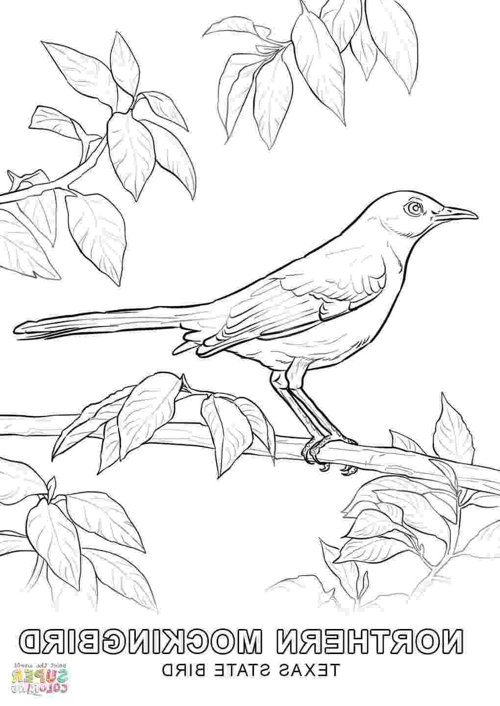texas state bird texas state bird page coloring pages state texas bird