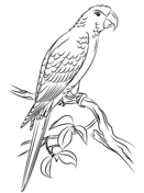 texas state bird texas state tree coloring page free printable coloring pages texas bird state