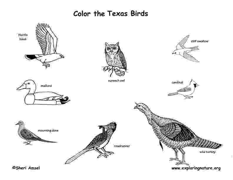 texas state bird united states clip art by phillip martin state bird bird state texas