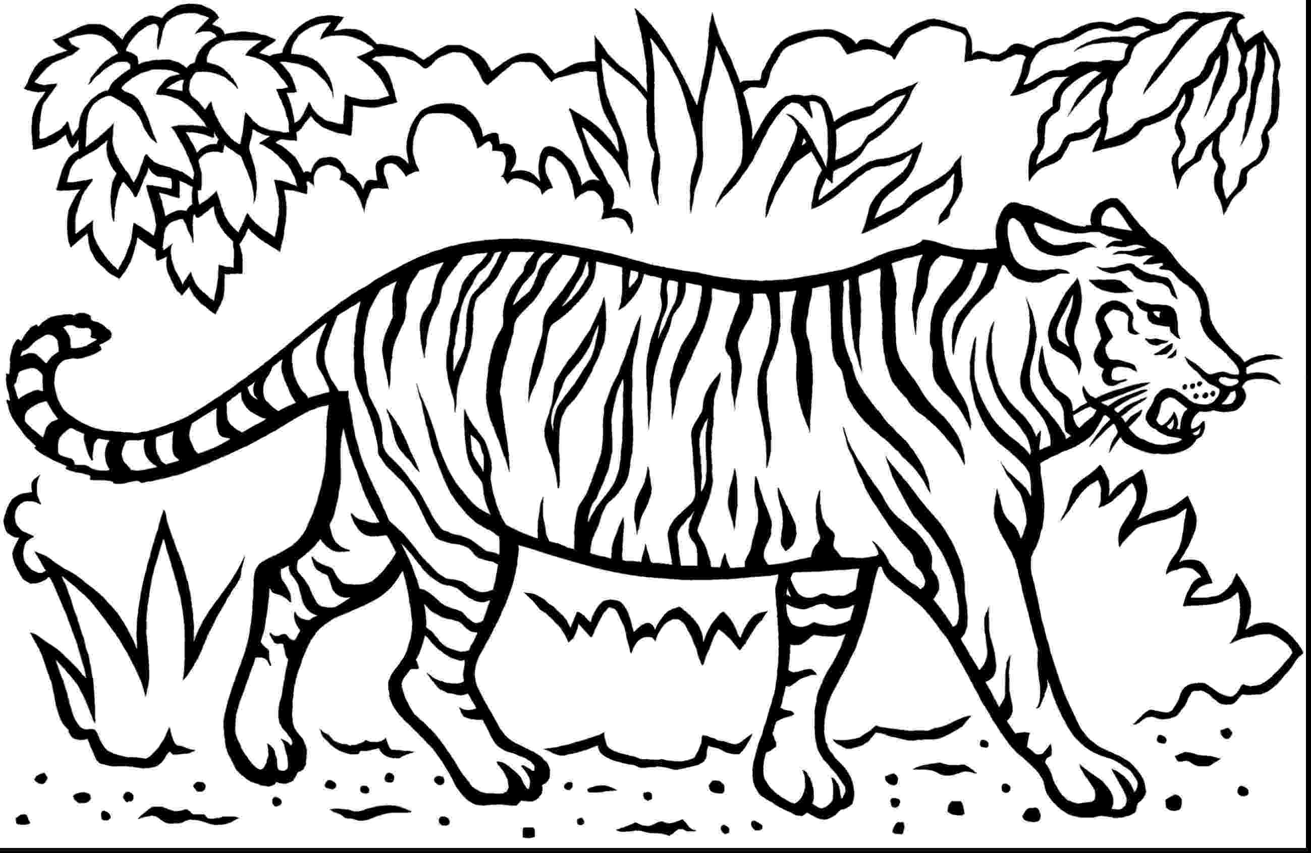 tiger color free printable tiger coloring pages for kids color tiger