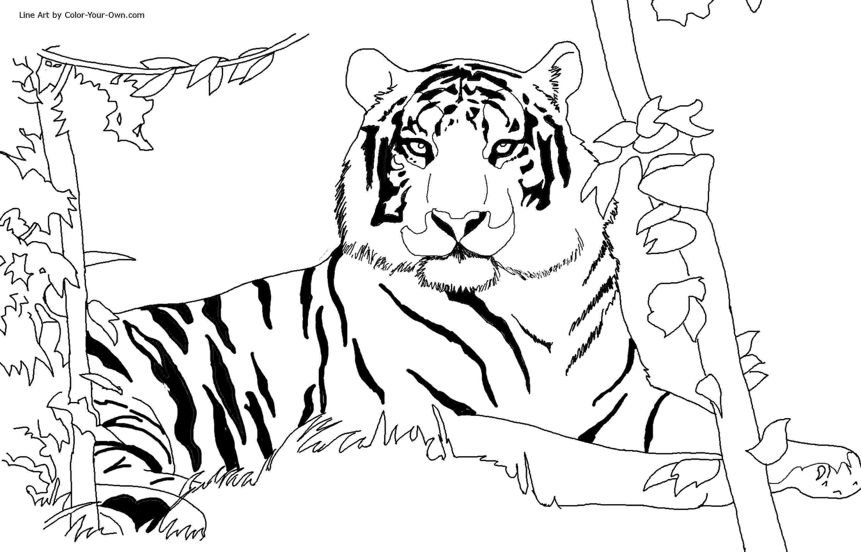 tiger color free tiger coloring pages tiger color