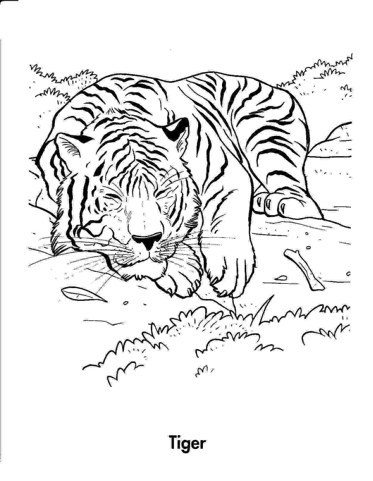 tiger printable baby tiger cub coloring page h m coloring pages printable tiger