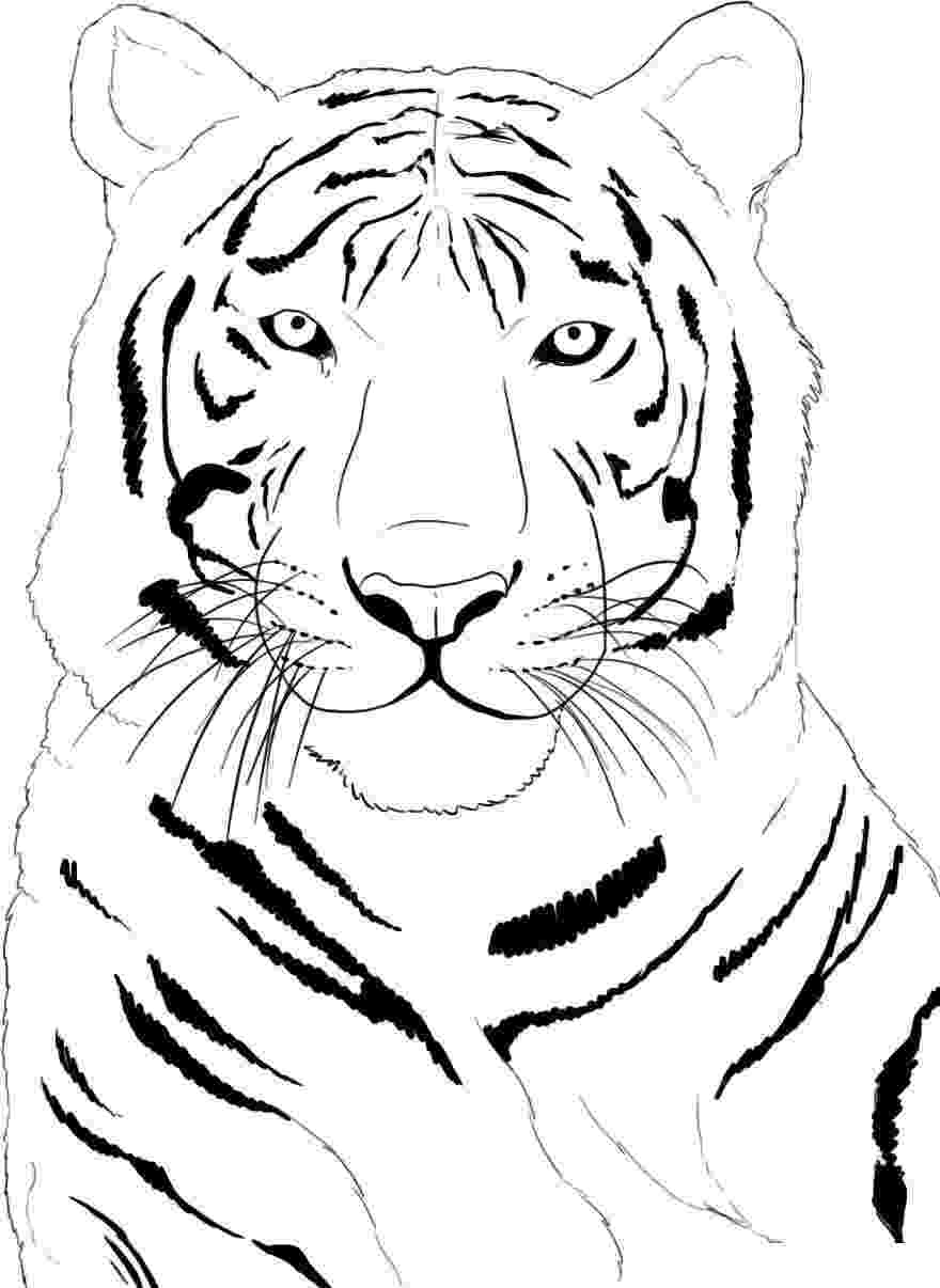 tiger printable tigers free to color for children tigers kids coloring pages printable tiger
