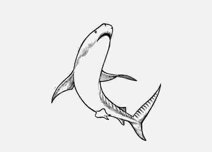 tiger shark coloring page 071013 free coloring pages and coloring books for kids coloring page tiger shark