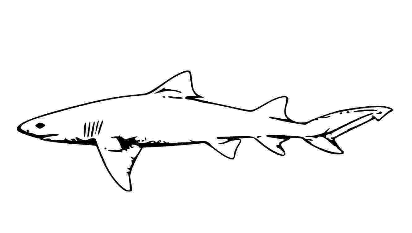tiger shark coloring page free shark coloring pages coloring shark tiger page