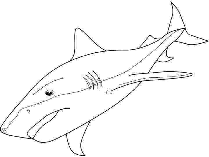tiger shark coloring page realistic tiger shark coloring page free printable page shark tiger coloring