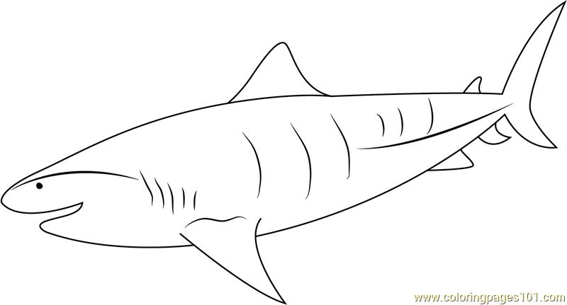 tiger shark coloring page sand tiger shark coloring page free printable coloring pages tiger shark page coloring