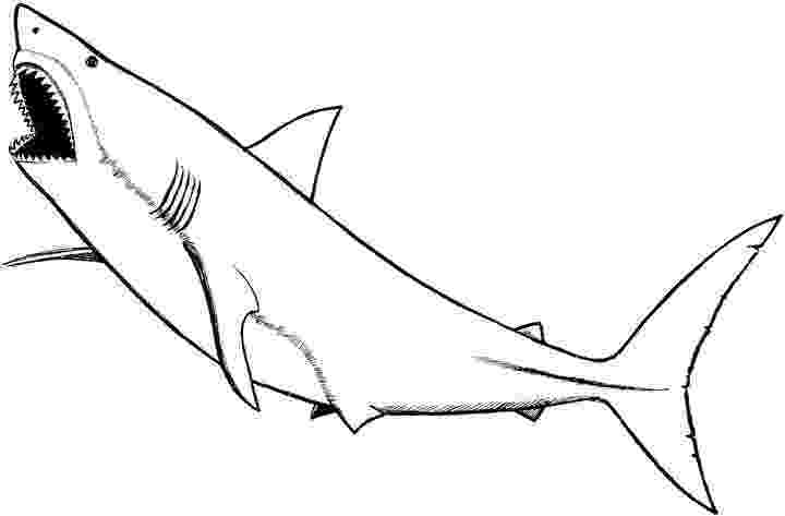 tiger shark coloring page shark coloring pages shark page coloring tiger