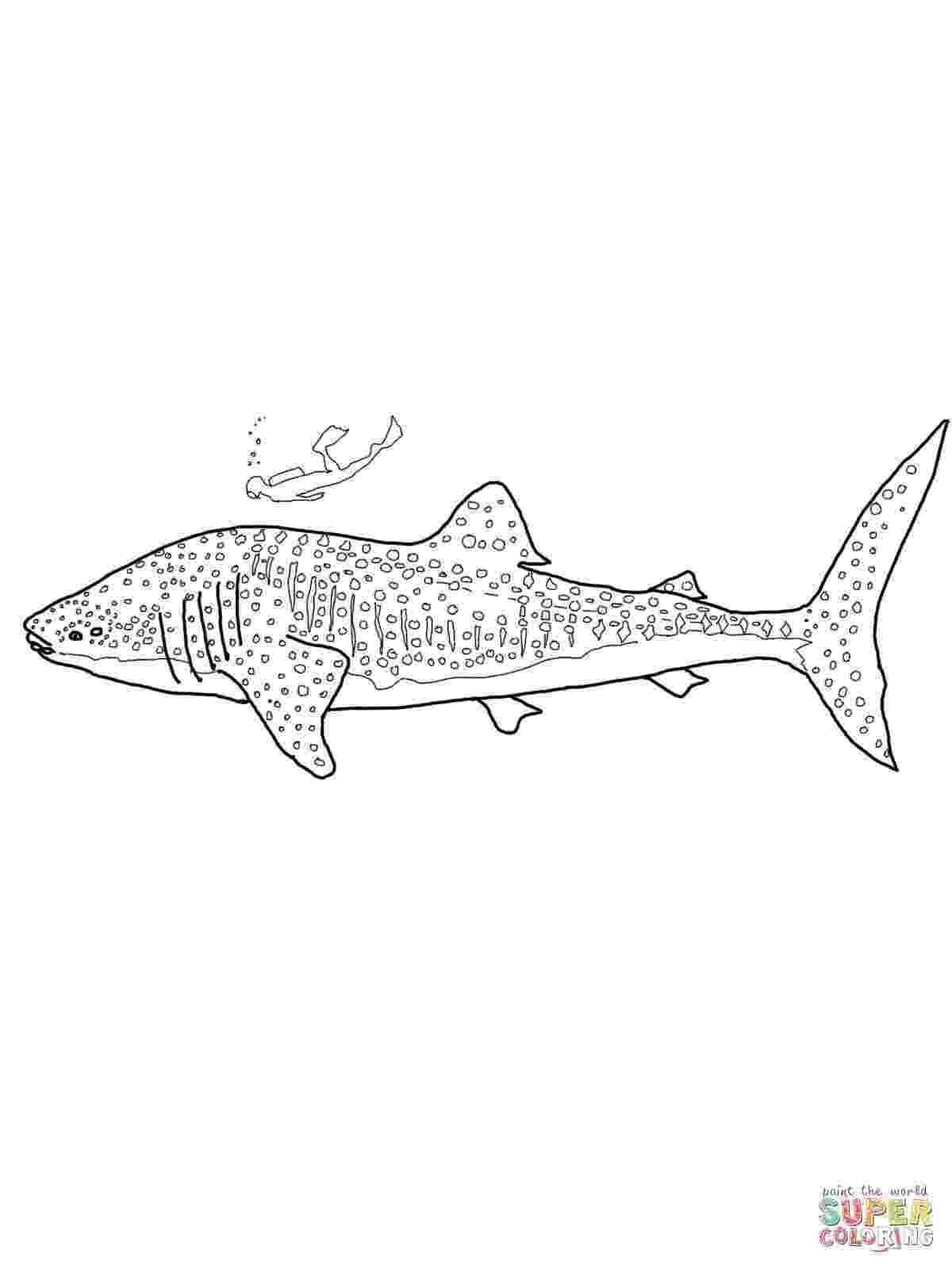 tiger shark coloring page tiger shark coloring pages to print free coloring books page coloring shark tiger