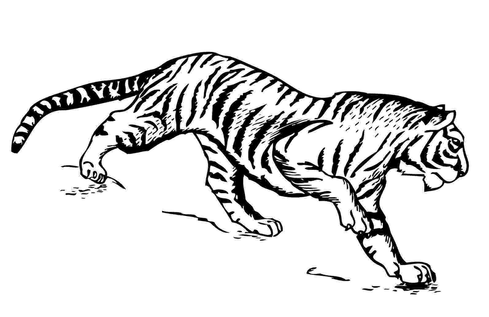 tiger without stripes coloring page stripeless tiger clip art at clkercom vector clip art without tiger page coloring stripes
