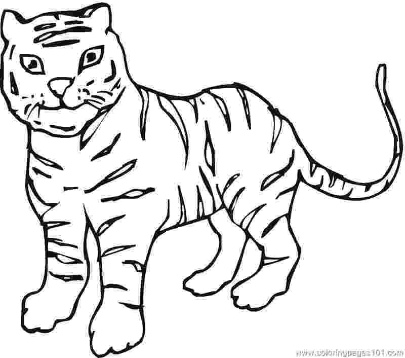 tiger without stripes coloring page tiger coloring pages coloring page tiger stripes without