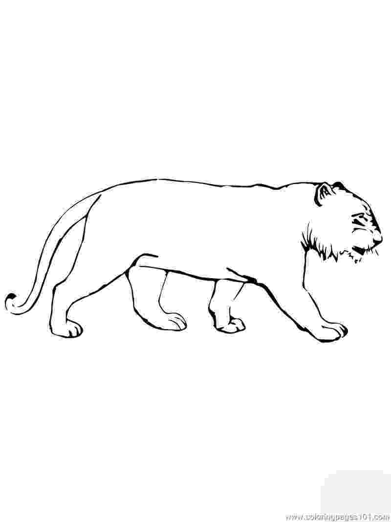 tiger without stripes coloring page tiger coloring pages tiger without page coloring stripes