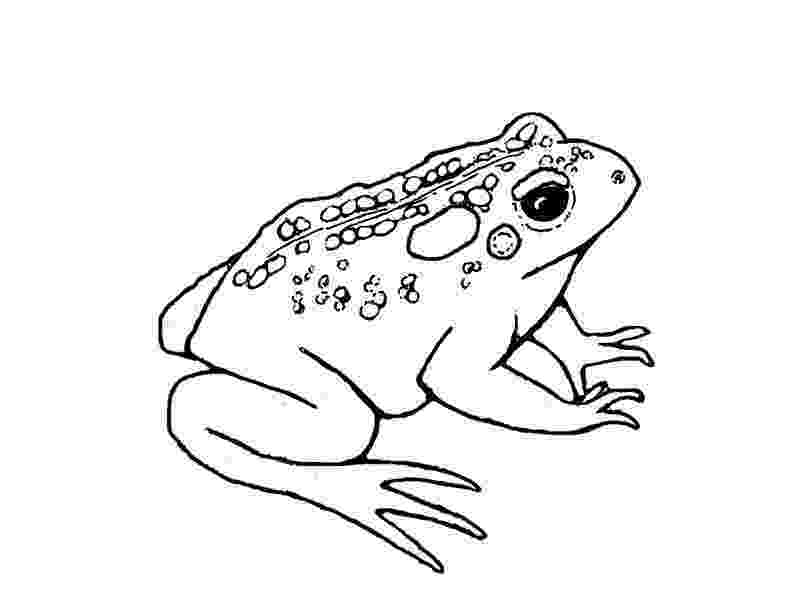 toad coloring pages free printable toad coloring pages for kids coloring toad pages