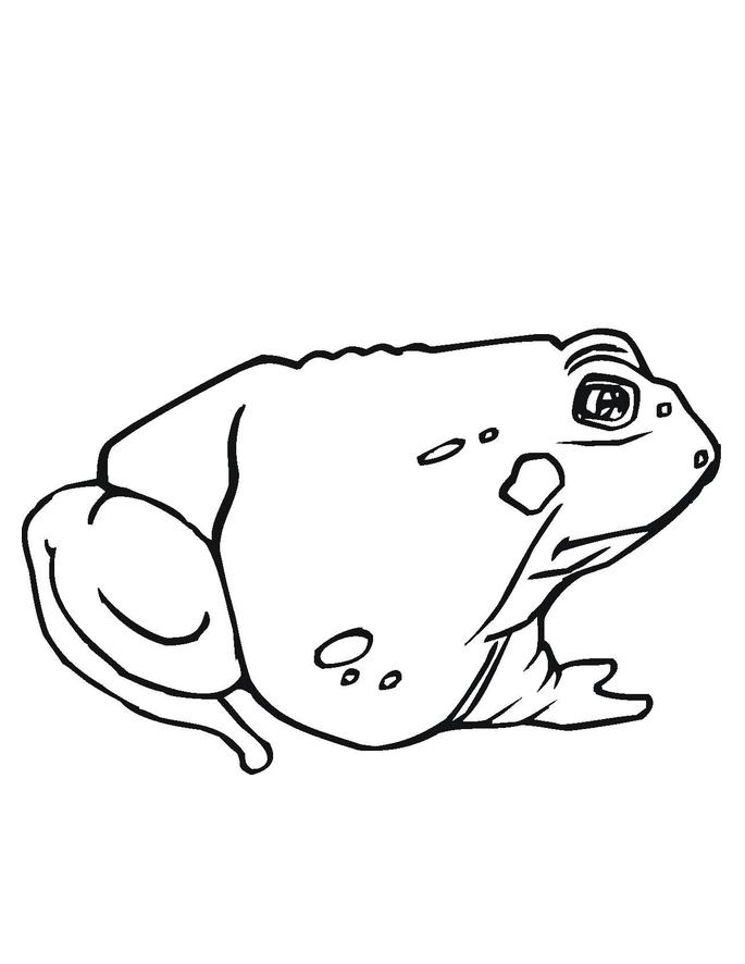 toad coloring pages toad coloring pages getcoloringpagescom coloring pages toad