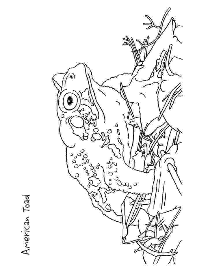 toad coloring pages toad coloring pages to download and print for free toad coloring pages