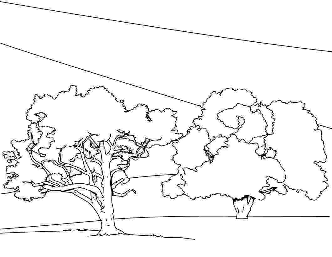 tree coloring pages free printable tree coloring pages for kids coloring tree pages 1 2