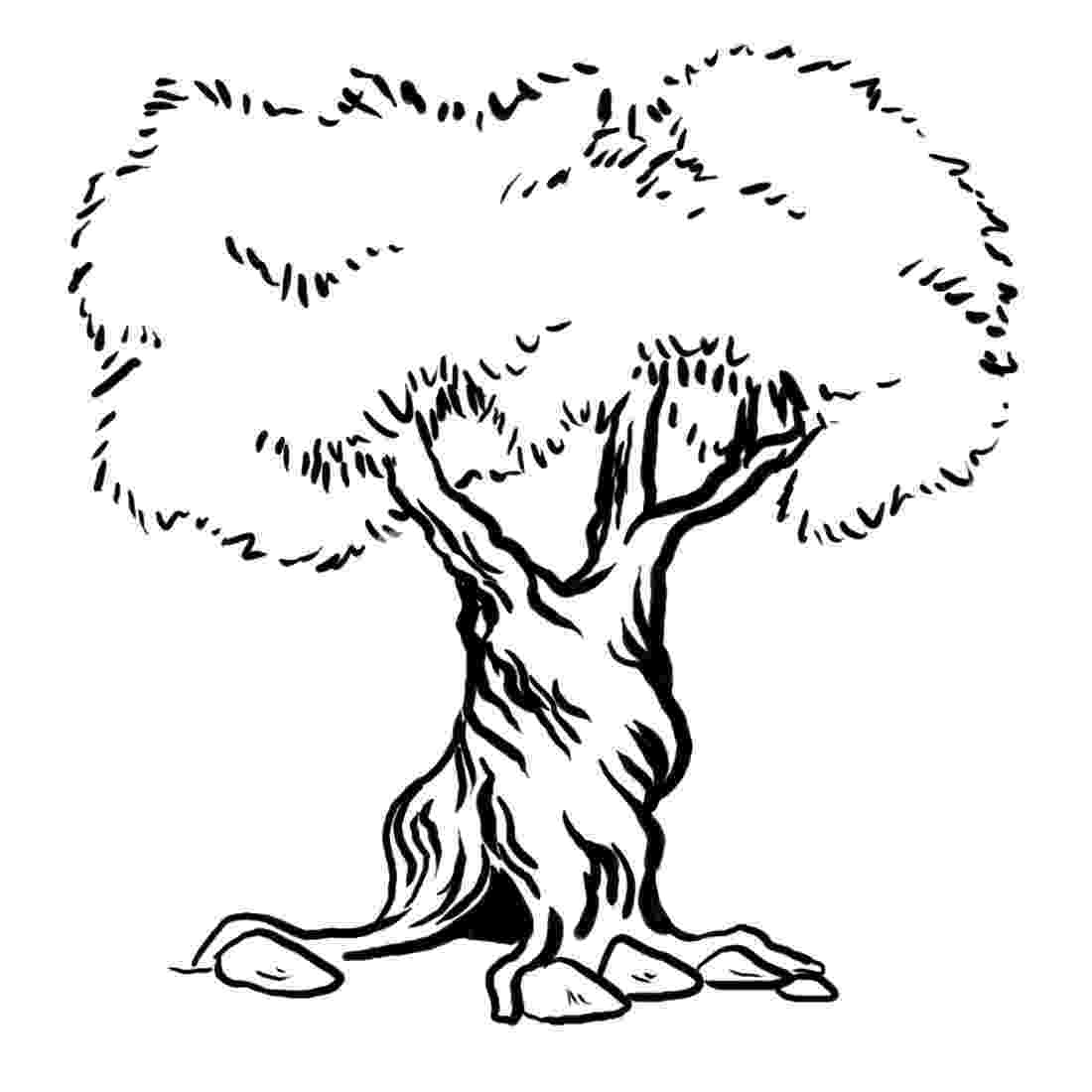 tree coloring pages how to draw an olive tree 6 steps with pictures wikihow pages tree coloring