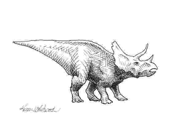 triceratops picture affordable dinosaur drawings fine art america triceratops picture