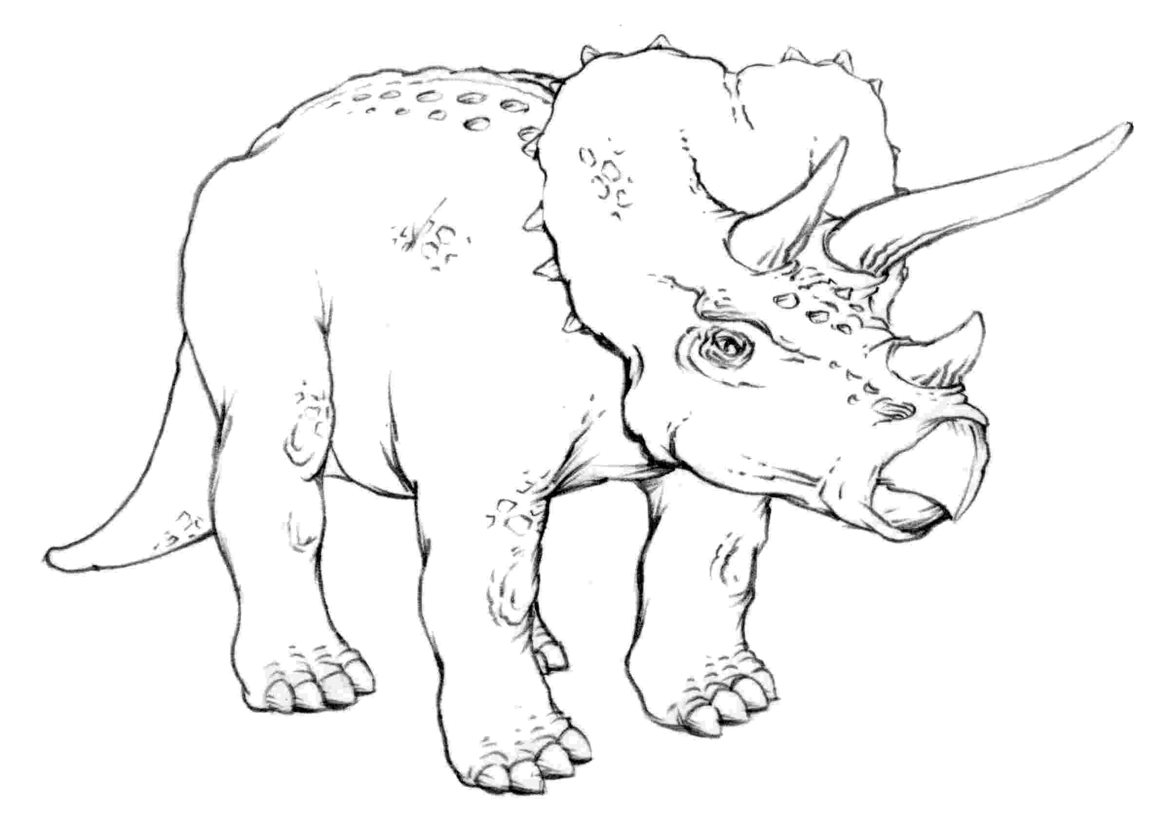 triceratops picture dinosaur t rex coloring pages coloring home picture triceratops
