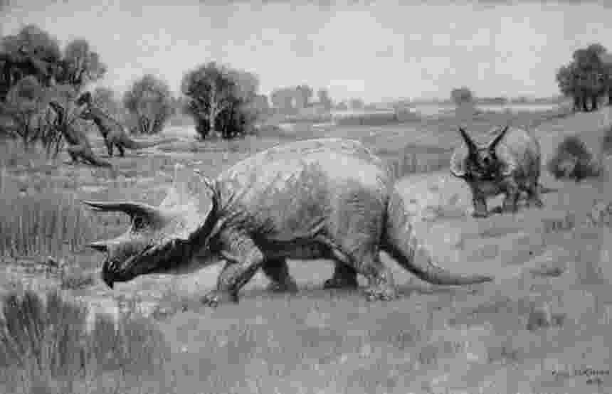 triceratops picture paleo illustrata building a dinosaur the research picture triceratops