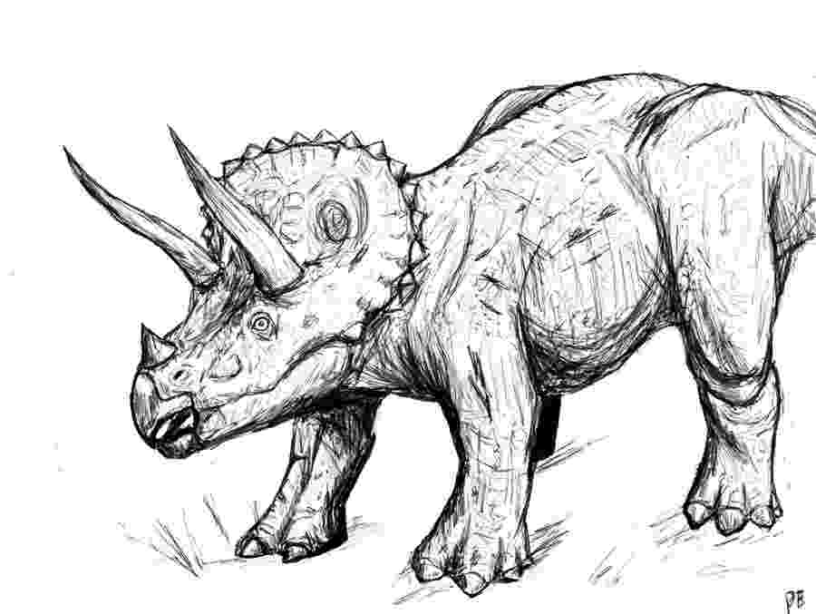 triceratops picture printable triceratops coloring pages for kids cool2bkids triceratops picture