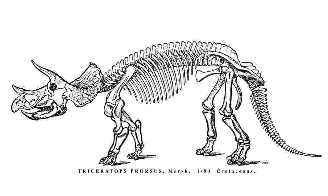 triceratops picture skeletal anatomy extinct monsters triceratops picture
