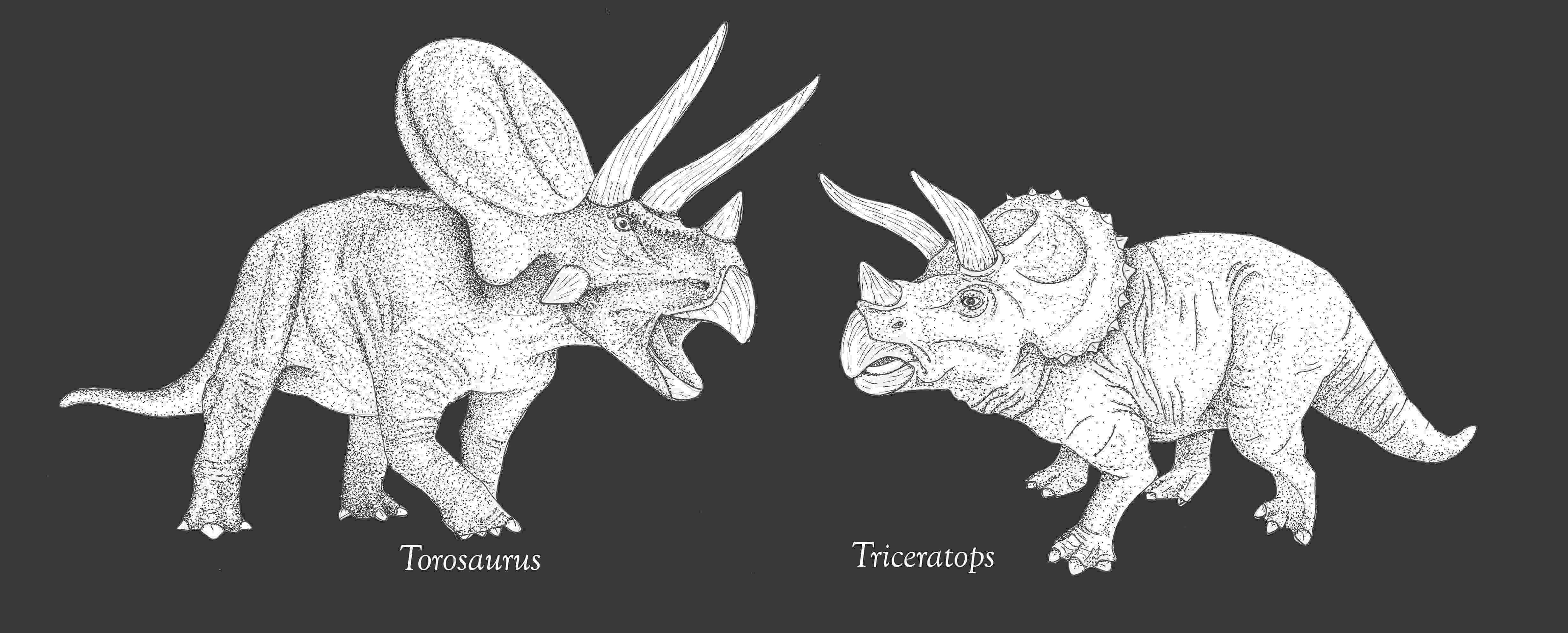 triceratops picture torosaurus life in pen and ink triceratops picture