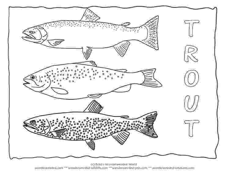 trout coloring page rainbow trout drawing template rainbow trout landscape trout coloring page