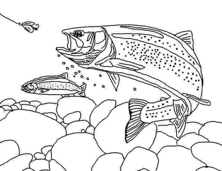 trout coloring page rainbow trout pic to color 2 trout coloring page with coloring page trout
