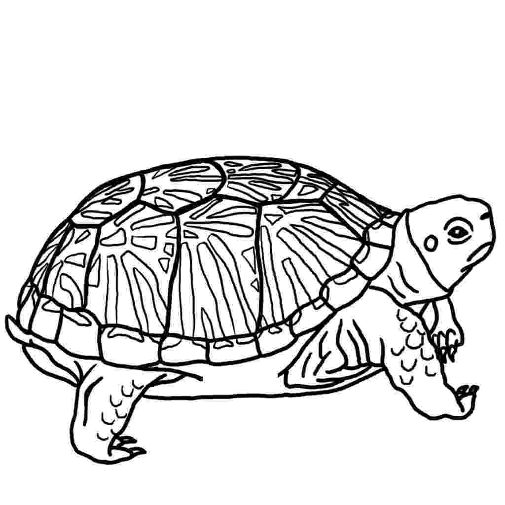 turtle pictures to color turtle coloring pages getcoloringpagescom pictures color turtle to