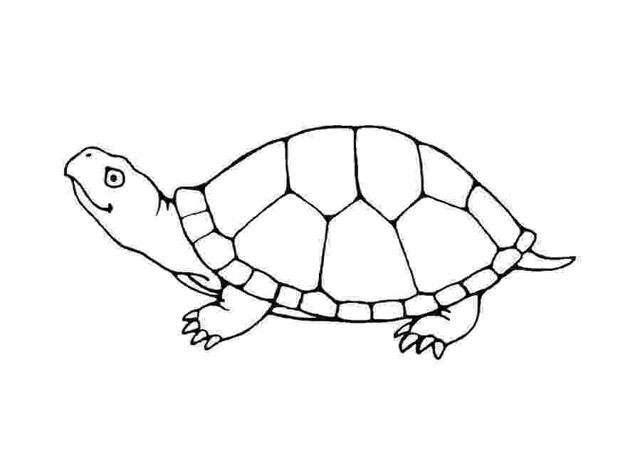 turtle pictures to color turtles to print turtles kids coloring pages turtle to pictures color