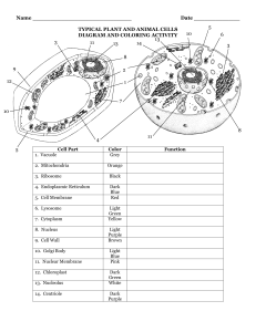 typical plant and animal cell diagram and coloring activity cells the little chambers in plants and animals normal animal typical and coloring diagram activity plant cell and
