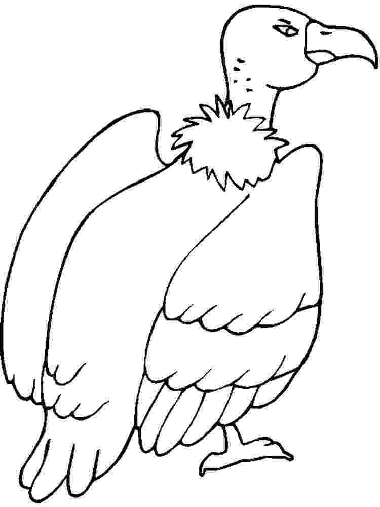 vulture coloring pages happy vulture coloring pages download free happy vulture vulture pages coloring