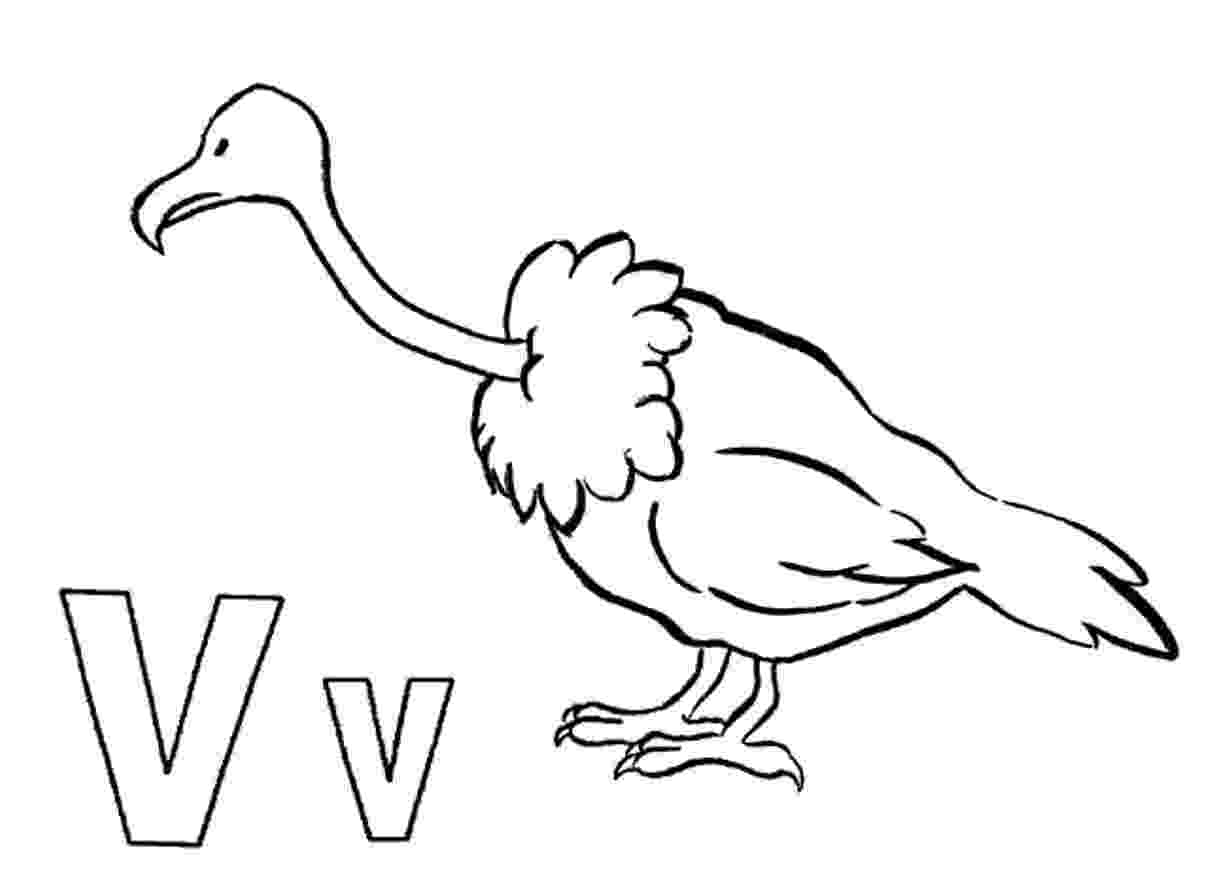 vulture coloring pages vulture coloring page getcoloringpagescom pages coloring vulture