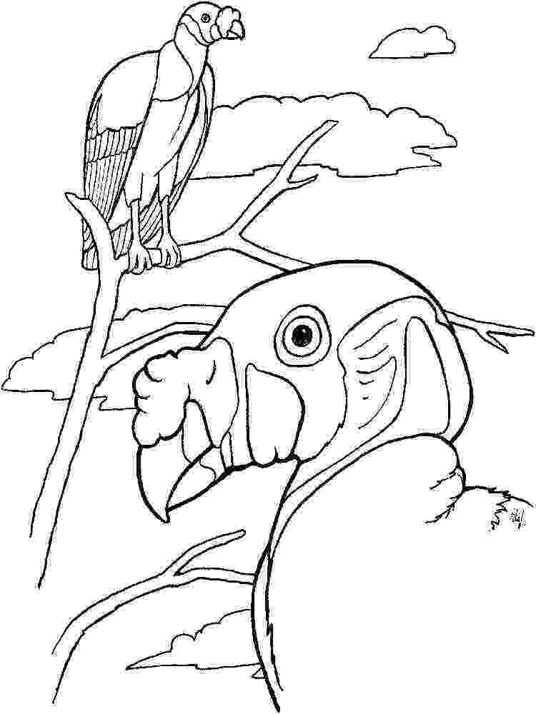 vulture coloring pages vulture coloring page getcoloringpagescom pages vulture coloring
