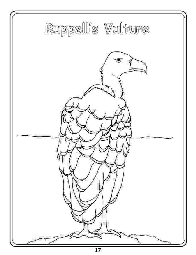 vulture coloring pages vulture coloring page getcoloringpagescom pages vulture coloring 1 1