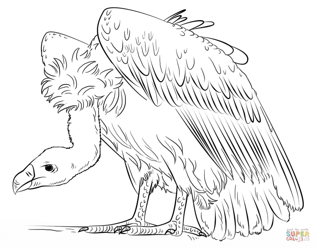 vulture coloring pages vulture coloring pages download and print for free pages coloring vulture
