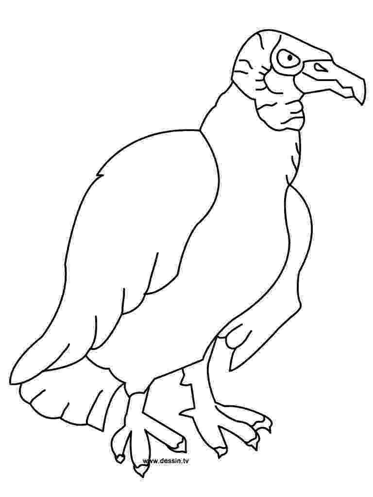 vulture coloring pages vulture coloring pages preschool and kindergarten coloring vulture pages 1 1